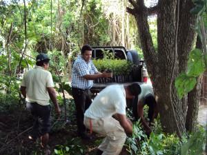Reforestación km 12 norte - Valle Sánchez.