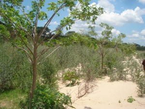 Reforestación km 9 norte.