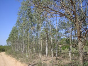 Reforestación km 32 - El Torno