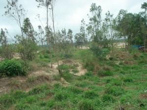 Reforestación en márgenes del río Piraí (km 12 Porongo - La Guardia).
